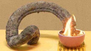 как горит фараонова змея