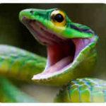 змея горит