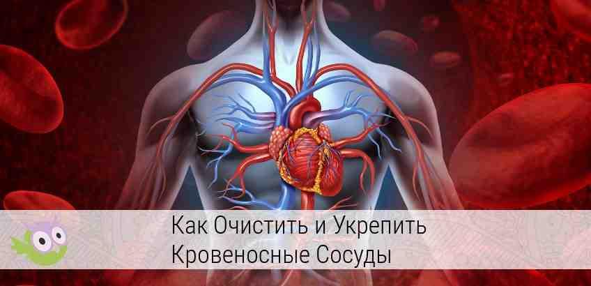 демонстрация кровеносной системы