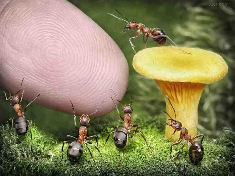 грибы и мураши