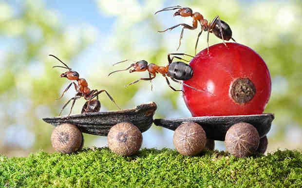 насекомые воруют