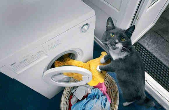 кот и машинка стиральная