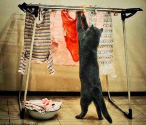 кот вешает белье