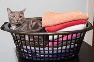 кошка ящик белья
